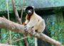 Jao bringt Schwung in die Lemuren-WG
